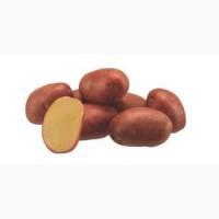Продам картофель посевной 1 репродукции