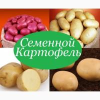 Картофель посевной.посадочный